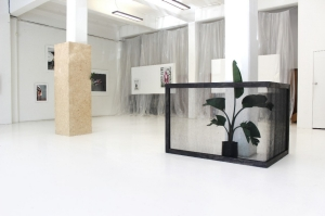 Installation artwork - plants inside glass containers.