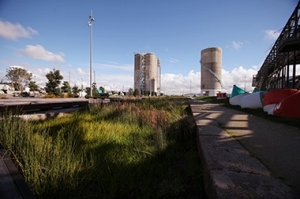Image of Silo Park in Auckland Viaduct, showing stormwater planting in foreground.
